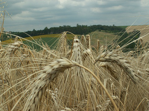 lycee-agro-environnemental-prive-saint-joseph